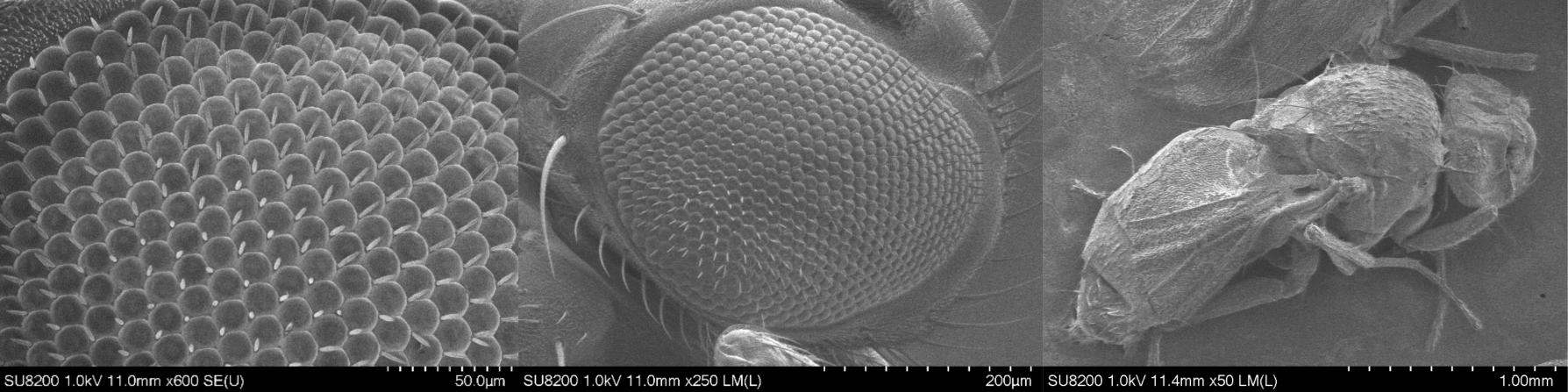 Hitachi SU8230 Scanning Electron Microscope