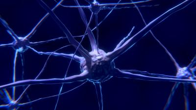 Artists rendition of a nerve cell