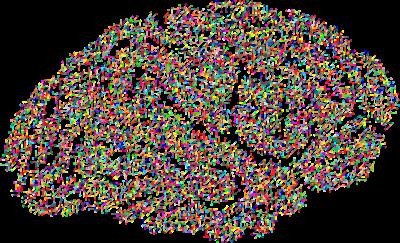 Artist rendition of brain