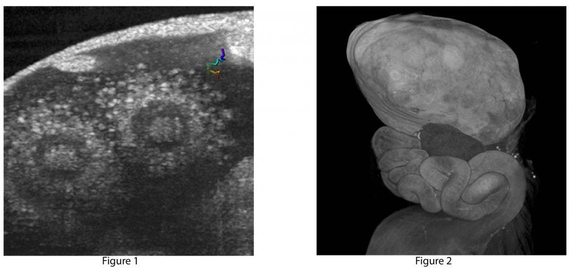 Images from Larina Laboratory