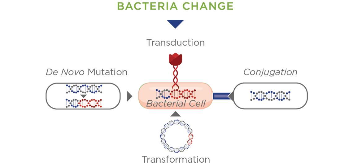 Bacteria Change