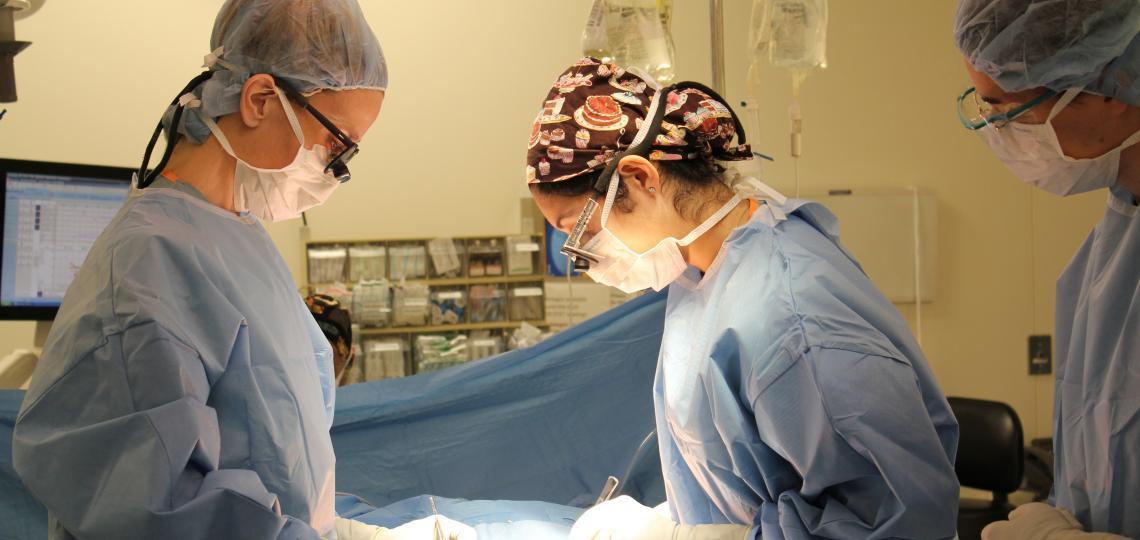 Abdominal Transplantation