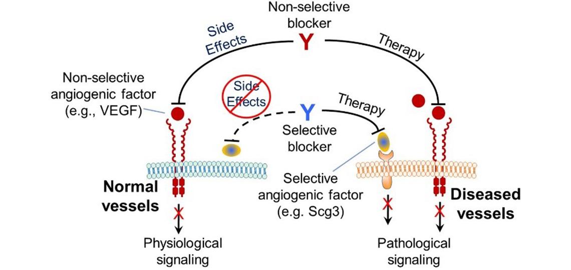 disease-targeting-wei-li-lab-final