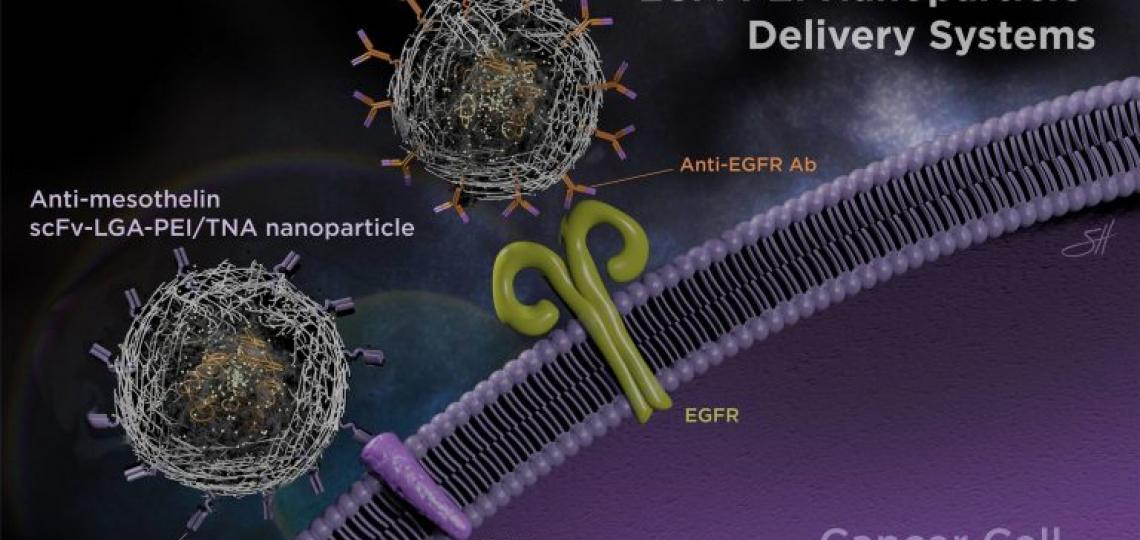 It's all in the delivery – Antibodies improve nanoparticle delivery of therapeutic nucleic acids, image by Scott Holmes, CMI
