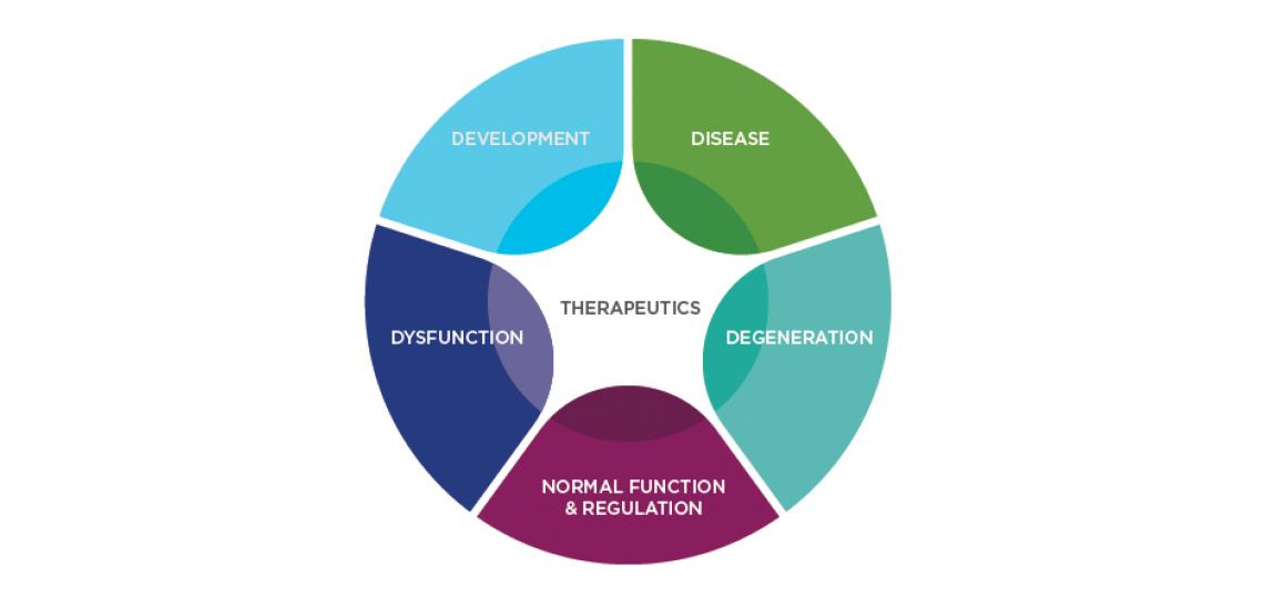 Research model used in the DDMT graduate program.