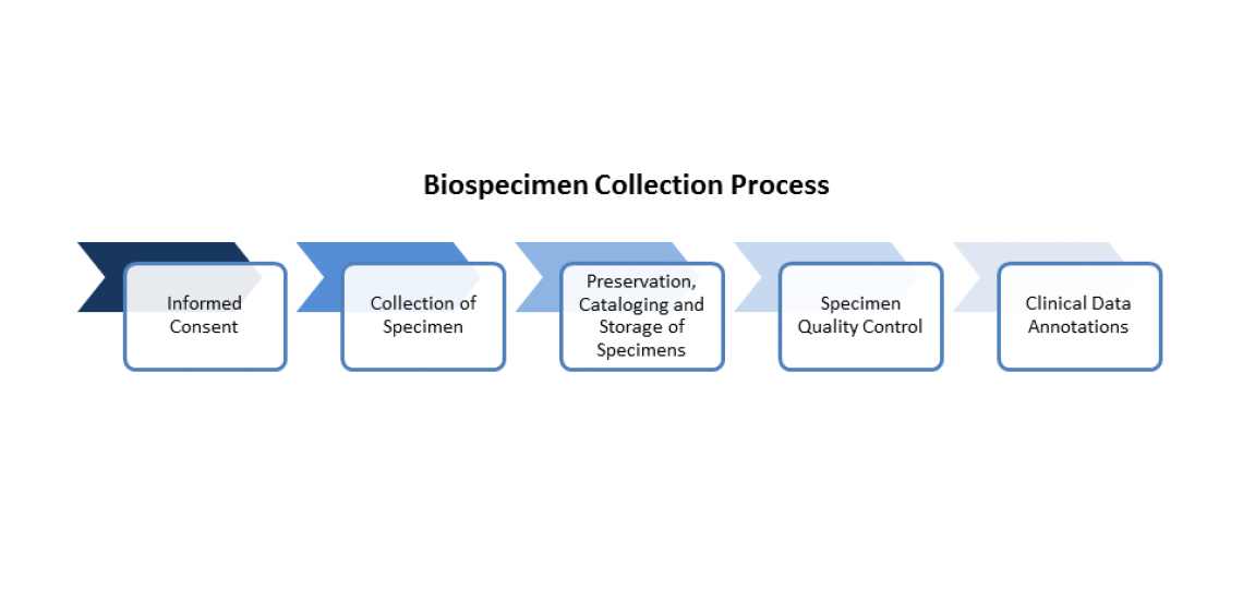 Flow chart for biobanking process.