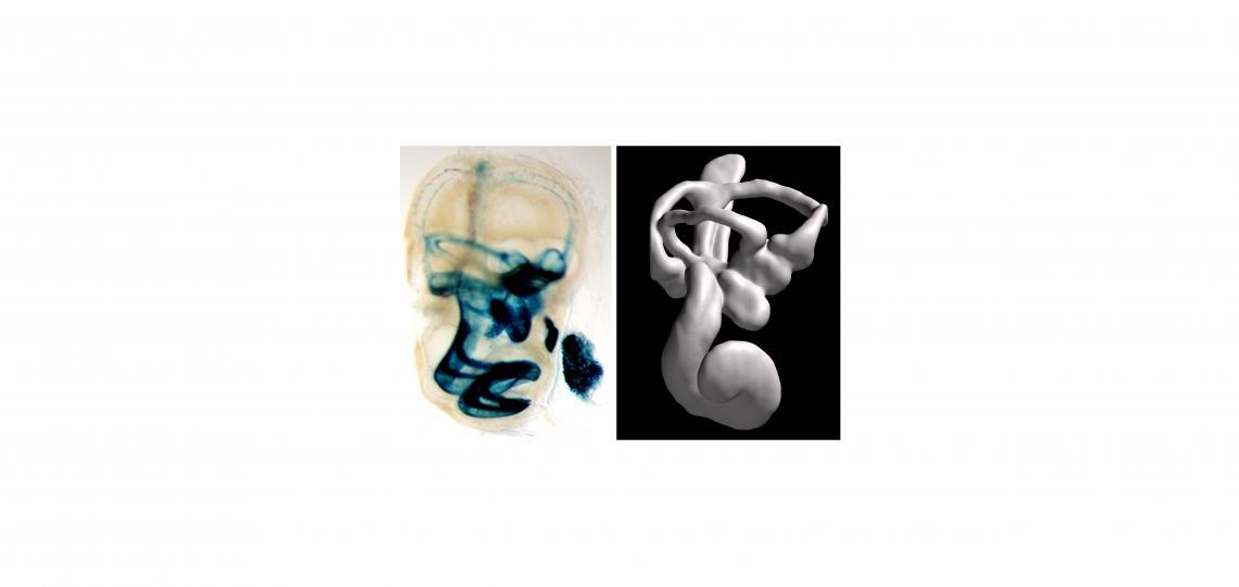 cochlea-spread-5.jpg