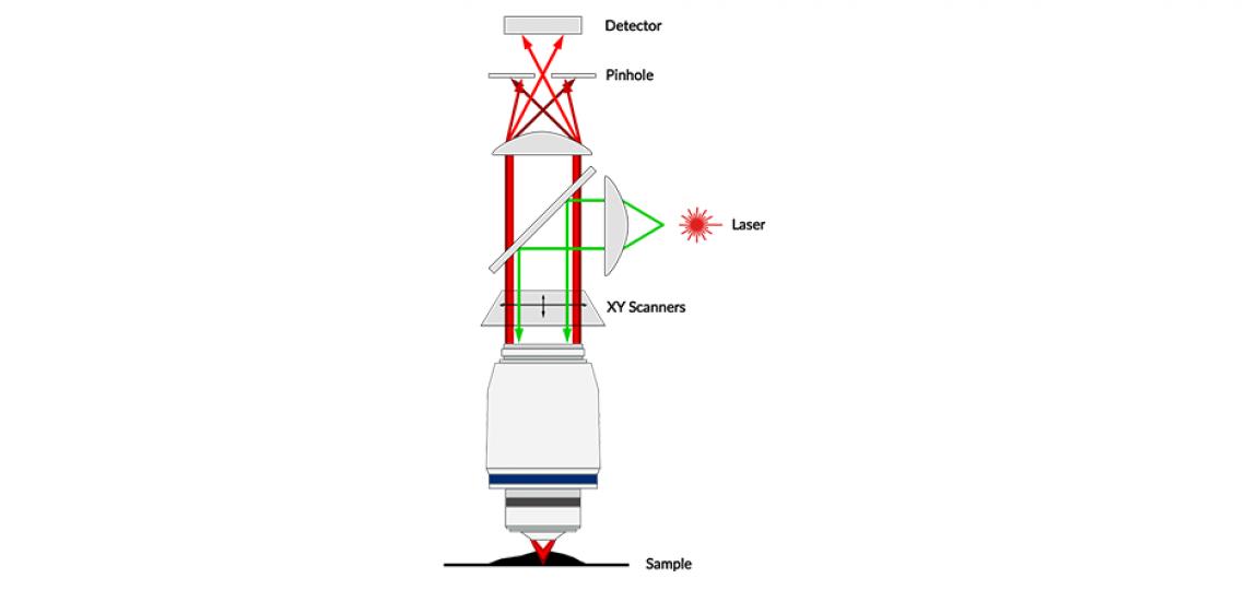 Confocal Microscopy