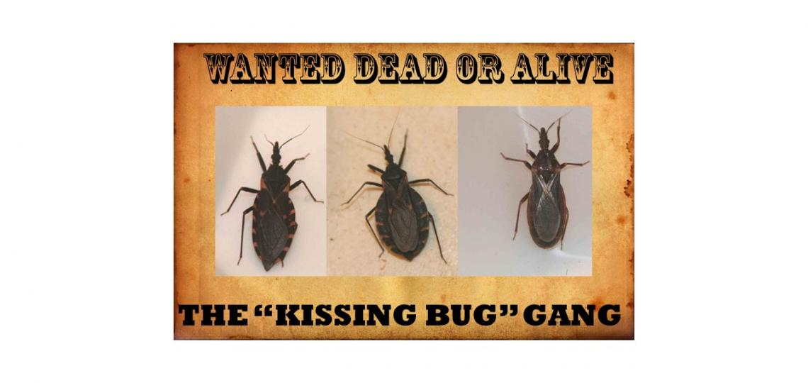 wanted poster kissing bugs dead or alive