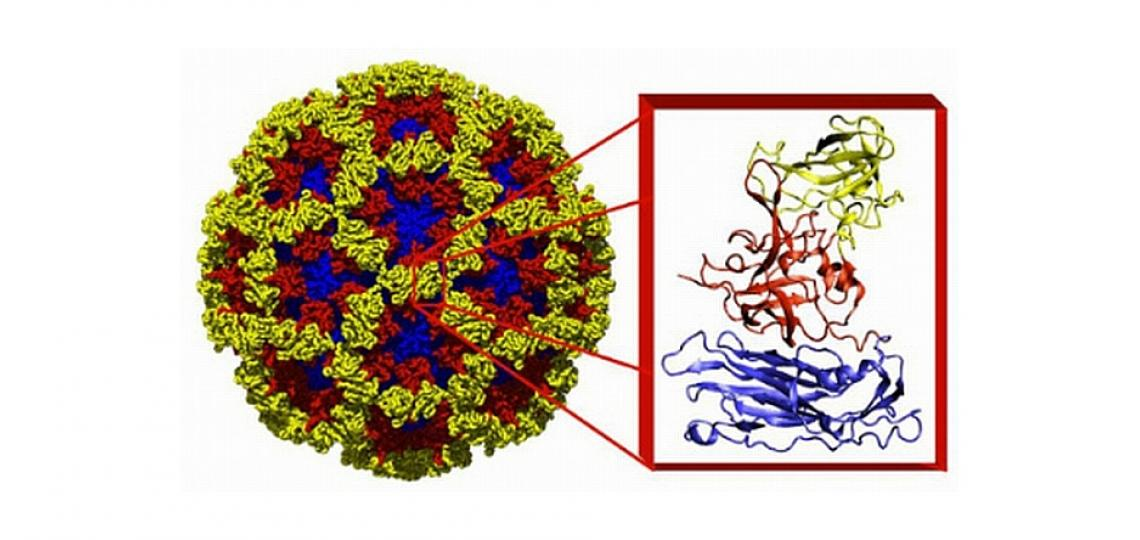 X-ray structure of the Norwalk virus capsid, with the inset showing details of the structure of the subunits. The different colors represent different regions of the capsid protein.