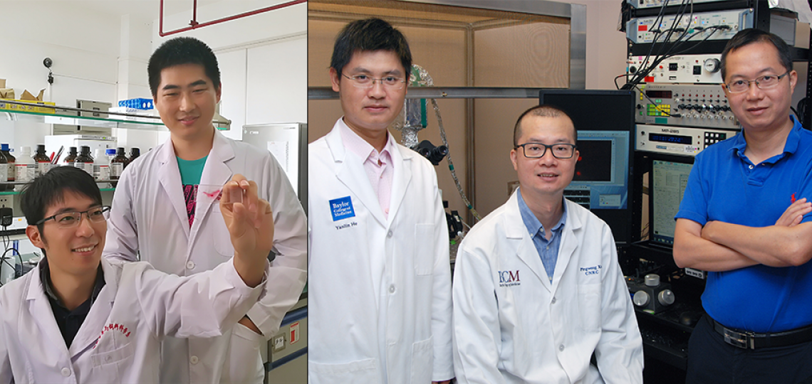 From left: Canjun Zhu and Dr. Gang Shu at South China Agricultural University, and Dr. Yanlin He, Dr. Pingwen Xu and Dr. Yong Xu, at Baylor College of Medicine.
