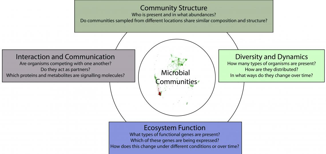 Study of microbes and their interactions with one another and their environment