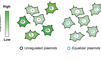 Illustration showing Equalizer plasmids affecting protein expression