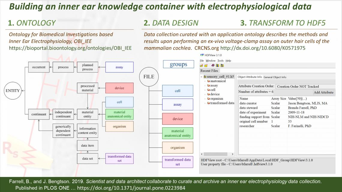 Cochlear Biophysics and Force research 2