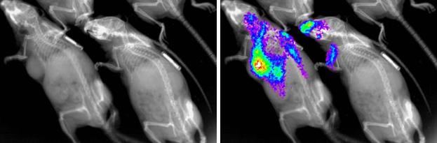 InVivo Imager (2D X-Ray, fluorescenceluminescence)