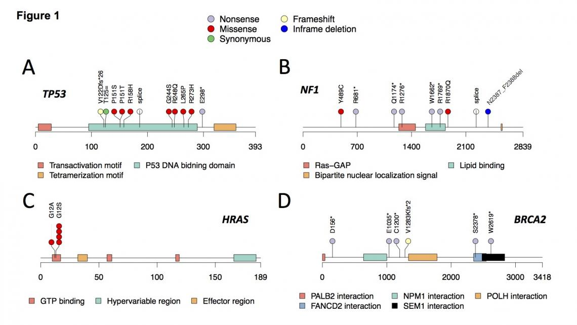 Key RMS predisposition genes and variants