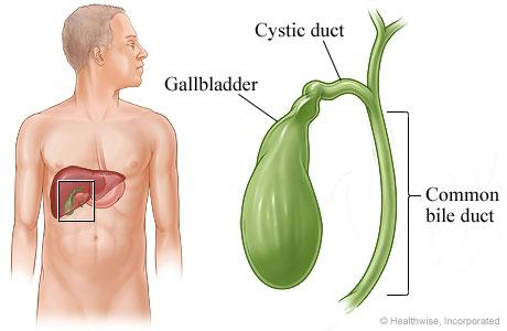 Gallbladder diagram