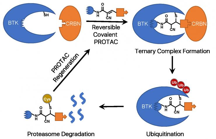 Enhancing Intracellular Accumulation and Target Engagement of Proteolysis Targeting Chimeras (PROTACs)