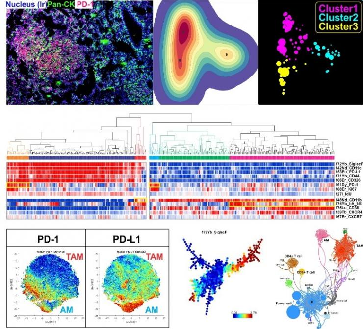 Multiple visualization tools to characterize the tumor-immune microenvironment