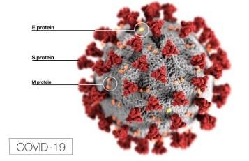 COVID-19 Virus Classification and Structure