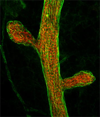 Confocal Microscopy and Image Analysis Core is available to both CNRC personnel as well as college-wide within Baylor as a fee-for-service facility.