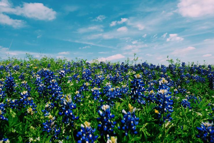 Warm weather and blooming flowers can mean sinus infections for allergy sufferers.