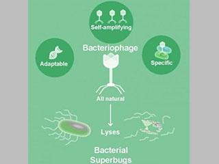 The many virtues of phage as antibacterials.