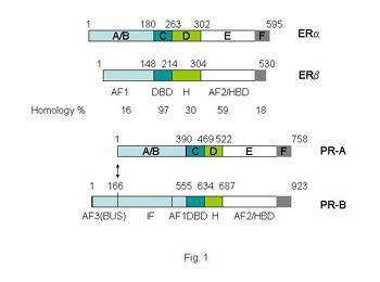 Estrogen Receptors in Breast Cancer Progression