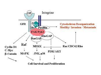 Tamoxifen Resistance