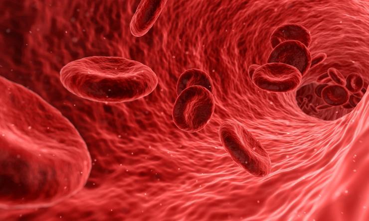 Illustration of red blood cells