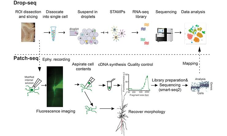 Multiple Single-cell RNA-sequencing