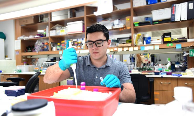A researcher works in the lab of Dr. Kimberley Tolias