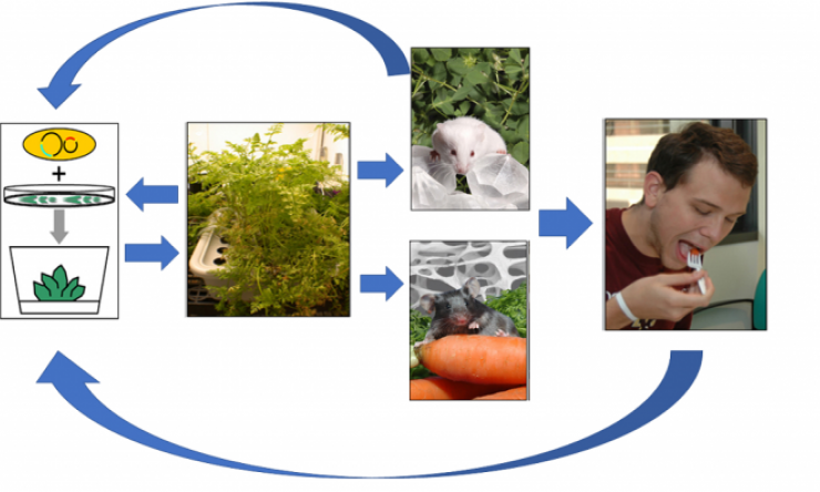 Plant Integration