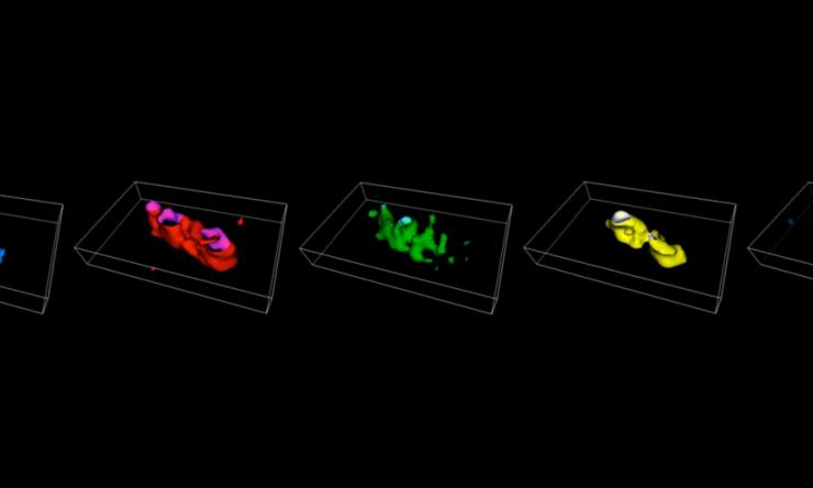 3-D imaging of the E. coli genome by chromosome painting
