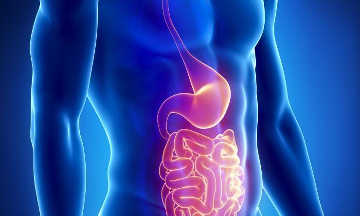 How good bacteria can help keep a gut healthy