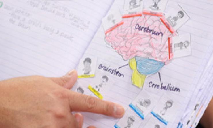 K-2 neuroscience student work