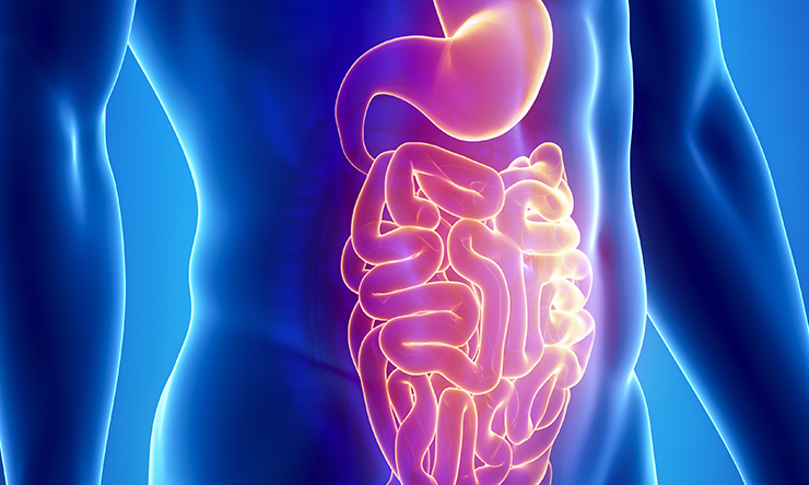 NIH renews grant to advance multi-institutional digestive disease research in the Texas Medical Center