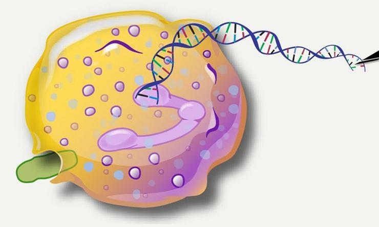 Graphic representation of DNA editing