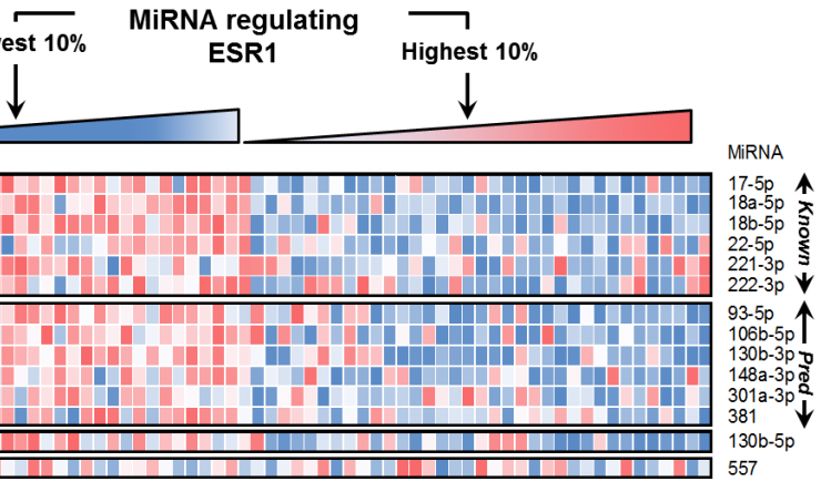 Cupid microRNA-target prediction was verified using high-throughput protein expression experiments.