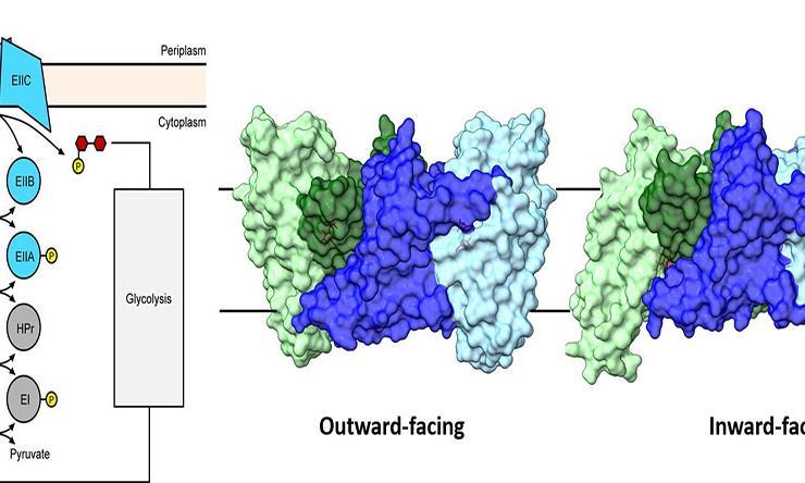 The phosphotransferase system from Ming Zhou Lab