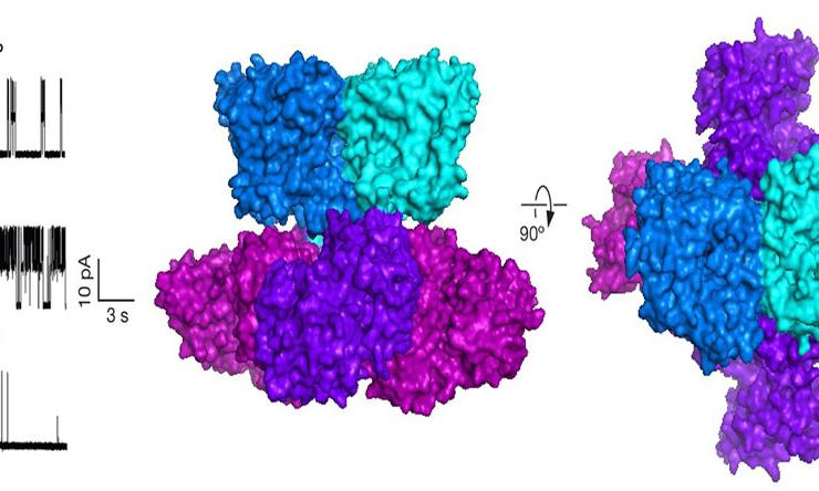 TrkH is an ion channel in bacteria and it is required for bacteria growth from Ming Zhou