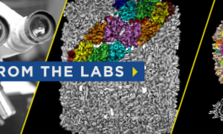 Read more about research at Baylor College of Medicine in From the Labs.