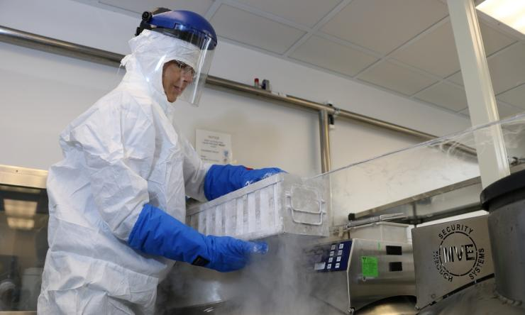 """""""Off-the-shelf"""" cells are safe and effective to treat viral infections"""