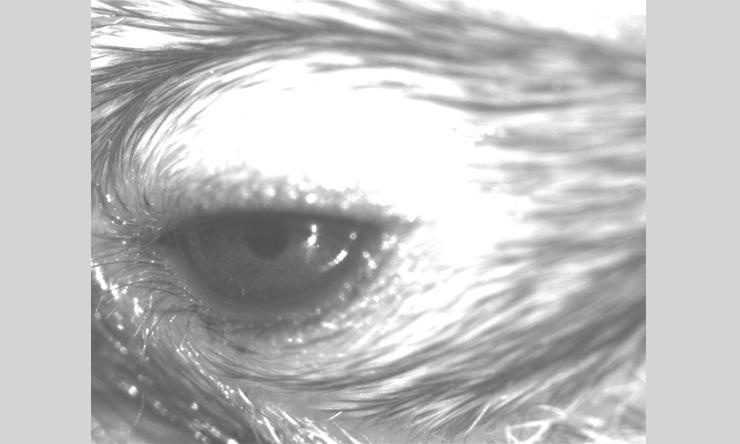 Mouse Eye