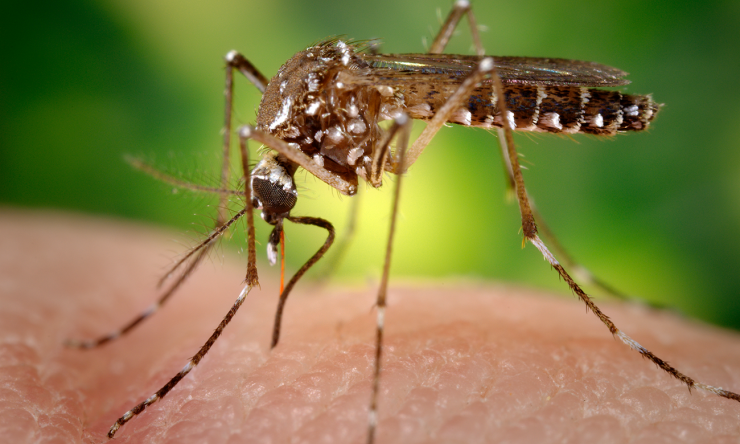 Dr. Peter Hotez says eradicating mosquito populations will help control the spread of the Zika virus.