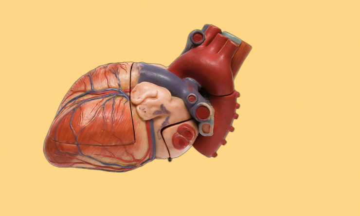 Dr. Mohi Khera says numerous studies find that cardiovascular disease and erectile dysfunction are linked.