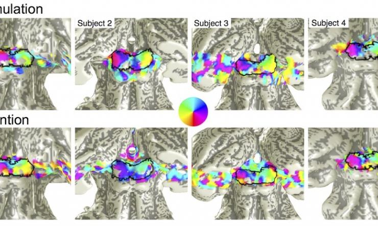 Polar-angle retinotopy evoked by attention and stimulation on human SC.