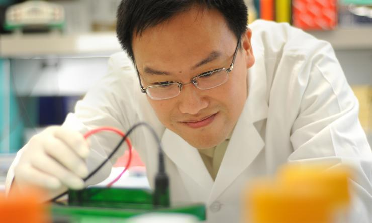 Dr. Xiang Zhang, assistant professor in the Smith Breast Center and a McNair Scholar in breast cancer